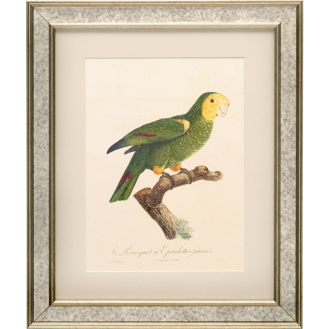 Tropical Bird Framed Print - Green | Value City Furniture and Mattresses