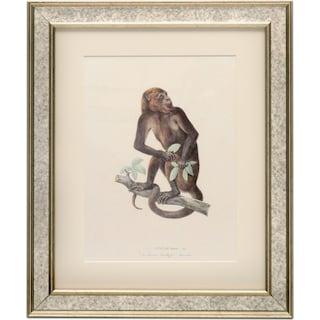 Primate Framed Print