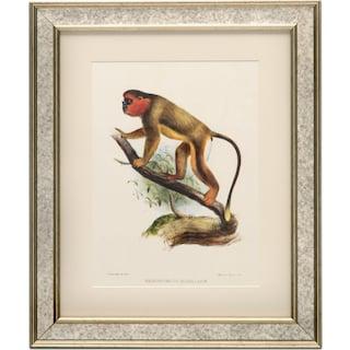 Primate Framed Print II