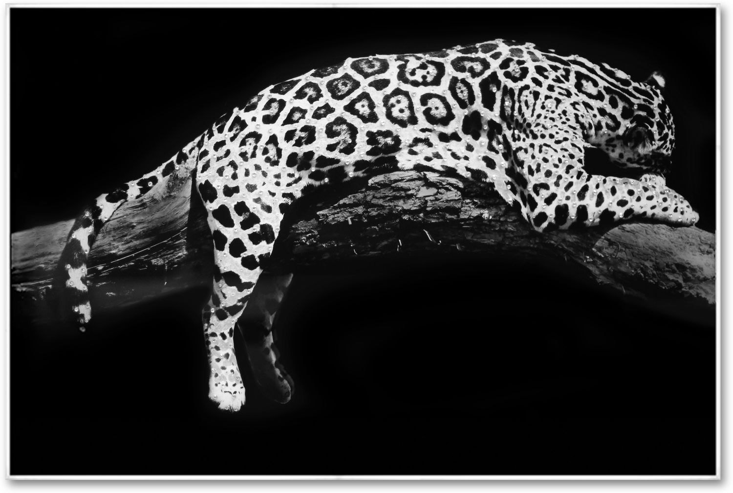 Home Accessories - Laying Leopard Wall Art