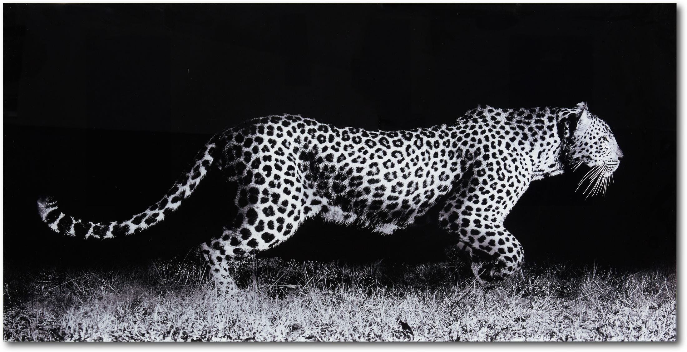Home Accessories - Fearless Leopard Wall Art 1