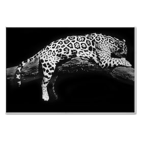 Laying Leopard Wall Art